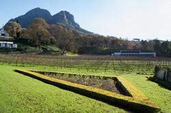 Molenvliet - Early Winter Vines