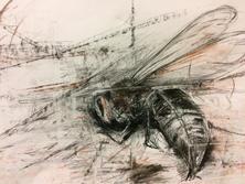 Autumn wasp