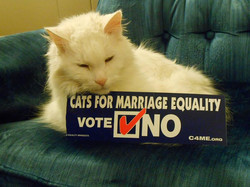 Lucifer the cat is an activist too!