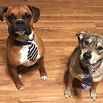 journey dogs.jpg