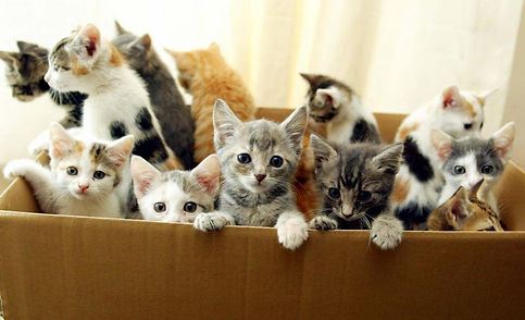 Box of cats.jpg