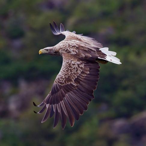 A breath of fresh air! Eagles return & air pollution plummets