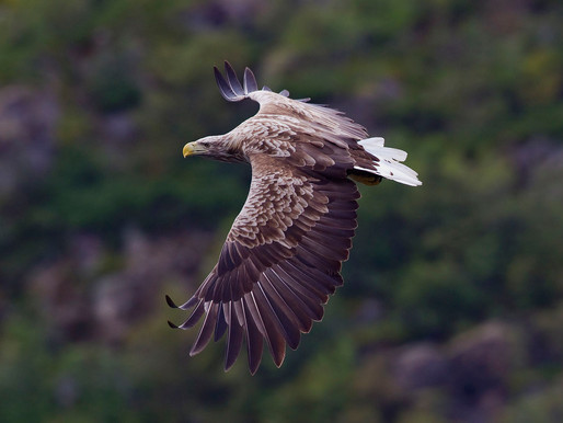 A breath of fresh air! Eagles return & air pollution plummets