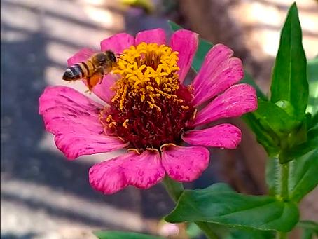 O que difere o cérebro da abelha do nosso?