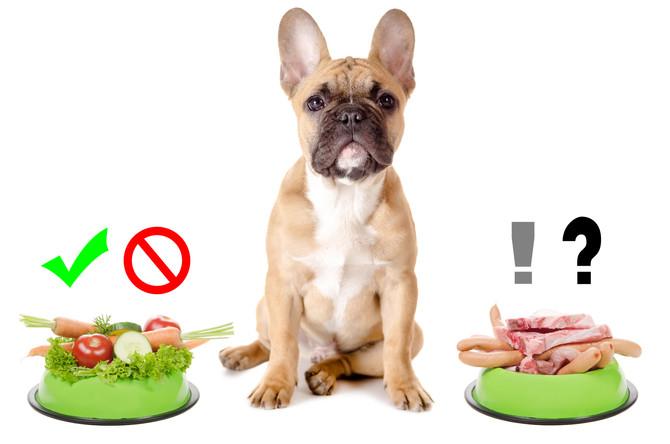 Gemüse! Eine gesunde Abwechselung für den Hund.