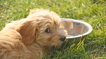 Die Sommerhitze beginnt an der Türkischen Riviera schon im Mai: Auch Haustiere haben jetzt Durst!