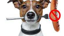 Bitte nicht! Gegrilltes für Hund und Katze