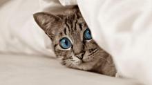 Eine Katze zieht ein. 6 Tipps, um den Anfang für Mensch & Tier zu erleichtern.