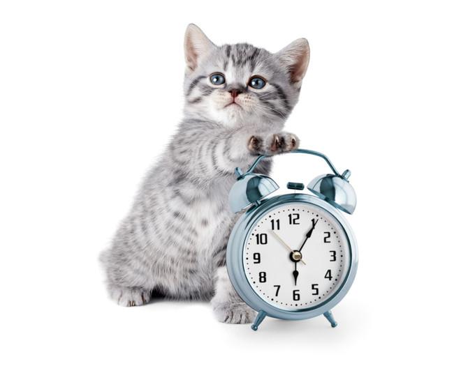 Interessant: Von der inneren Uhr unserer Haustiere...