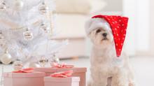 Bitte nicht! Ein Tier ist kein Weihnachtsgeschenk!