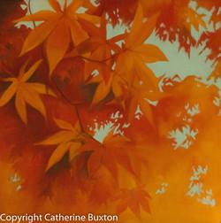 Autumn Leaves-3372