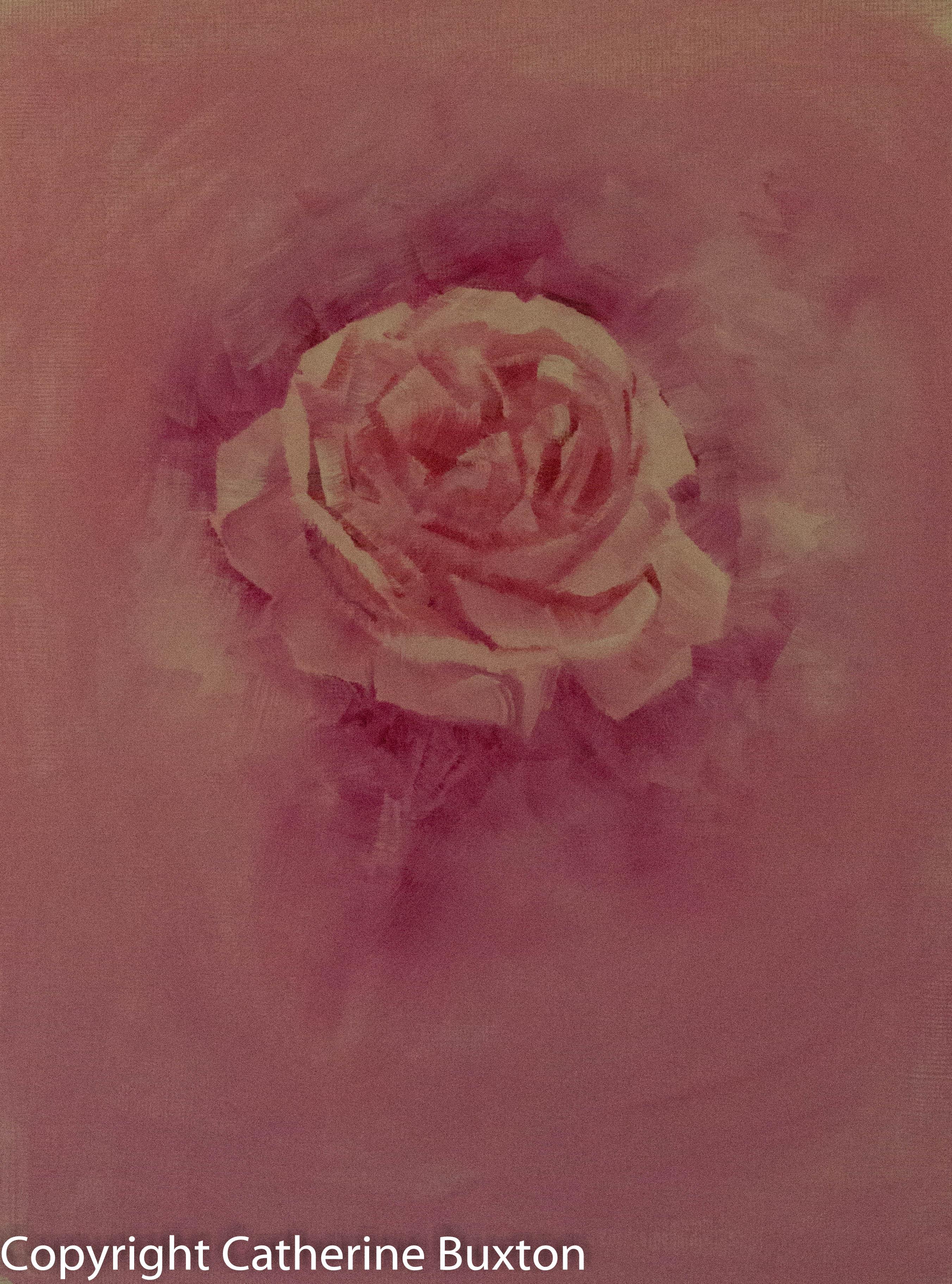 Pink Rose-3381