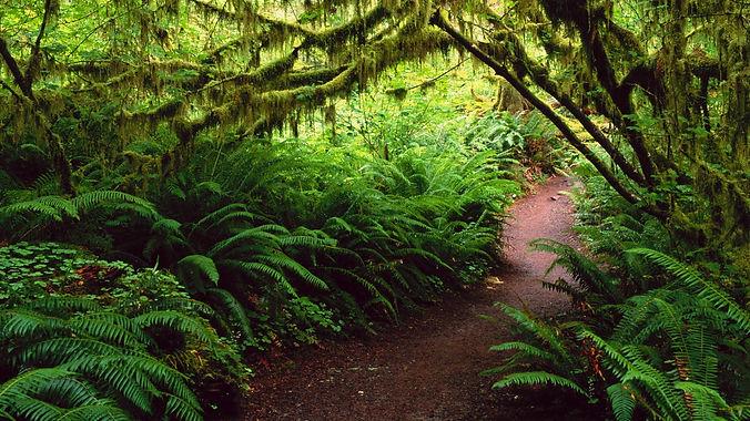 Forest path ferns 2.jpg