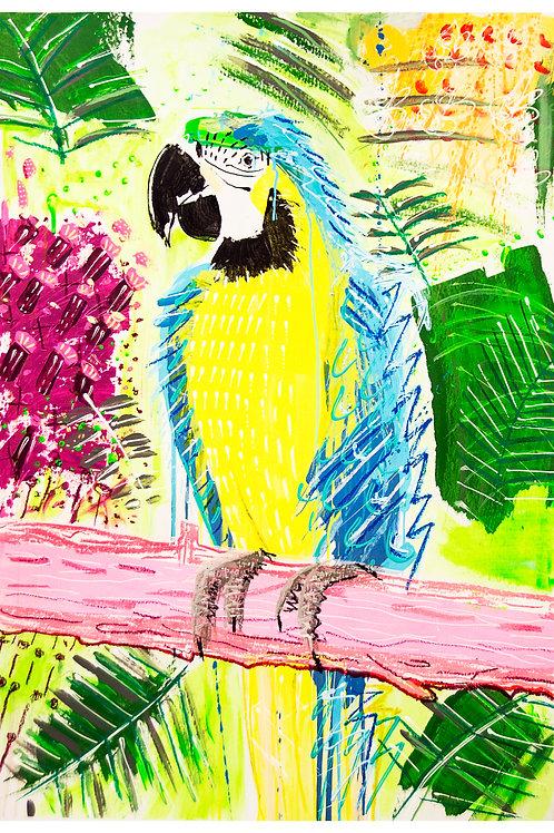 Parrot  A4 Print