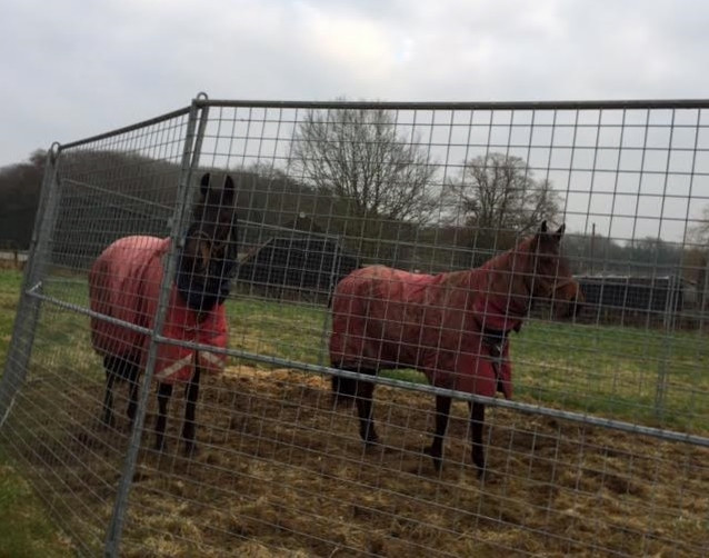 Happy horses after their run yesterday