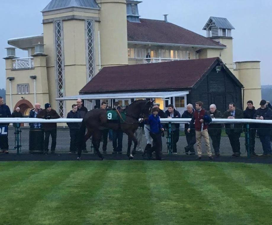 Stowaway in the parade ring