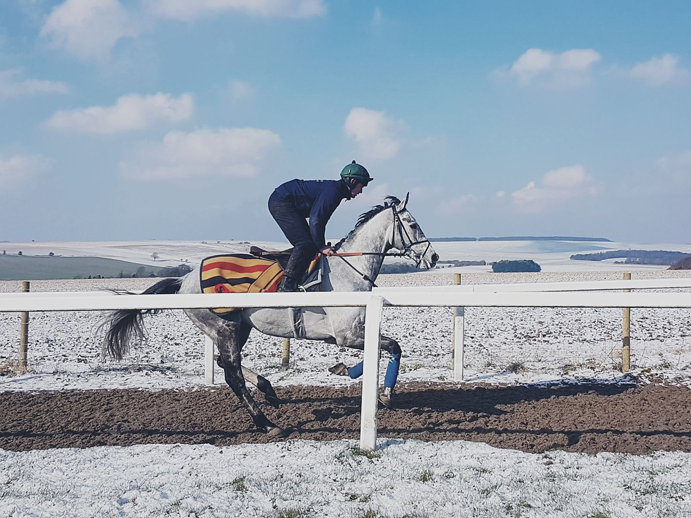 Amalfi Doug having a canter in the snow