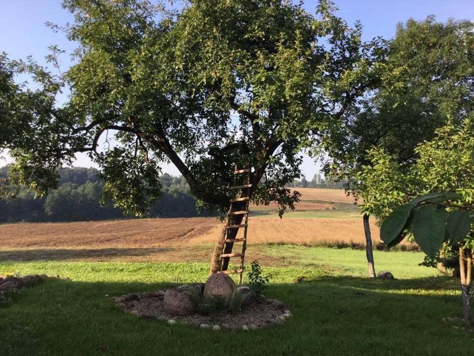 Lato 2016 w Golubkach