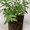 Thumbnail: צמחי תבלין