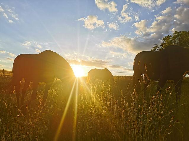 Well Ranch / Stanislaus Wögerbauer