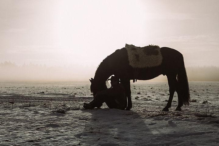 Beziehungsarbeit mit Pferden / Stanislaus Wögerbauer
