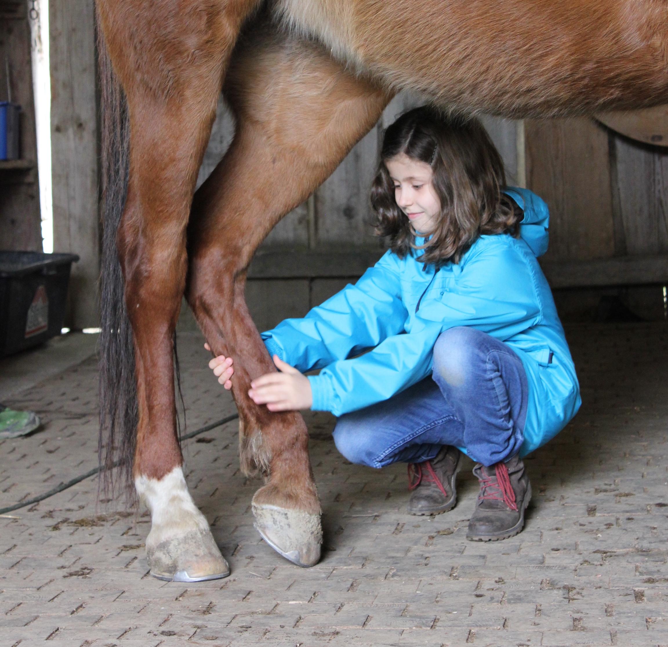 Beziehungsarbeit mit Pferden - Stanislau