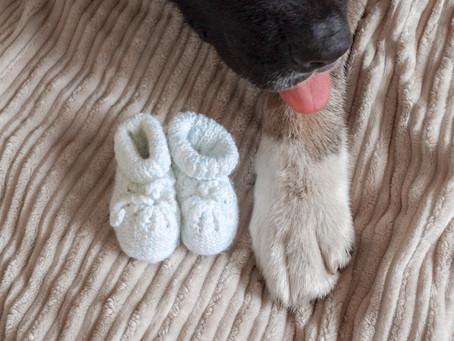 Vivre sa grossesse aux côtés d'un chien: Le premier trimestre