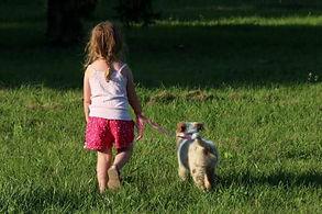Une petite fille promène un chiot dans une prairie ensoleillée.
