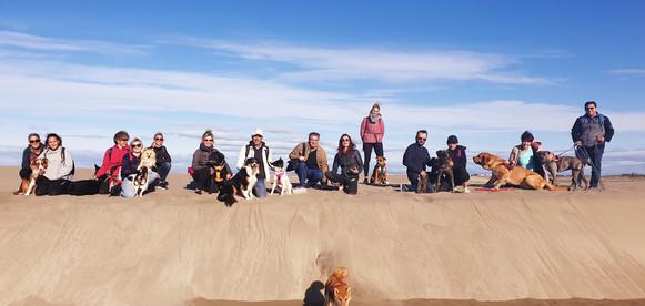 Balade canine à la plage