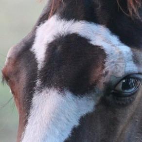 Le Monde de Maïkan oui, mais les chevaux aussi en font partie!