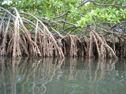 Inventaires des zones humides