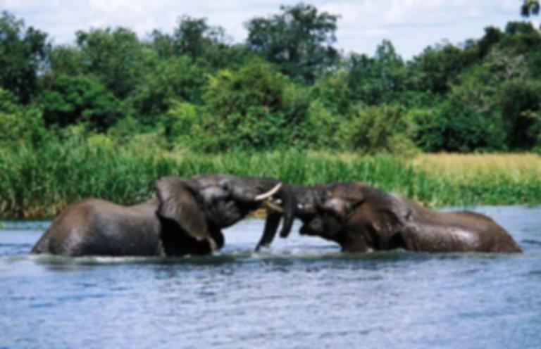 Uganda-Safaris-murchison-alls_national_p