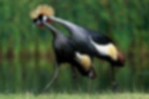 A_Ugandan birding.jpg