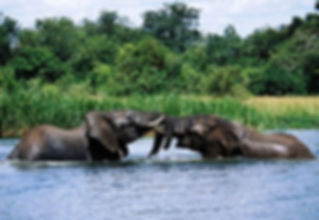 Uganda-Safaris-murchison-alls_national_p