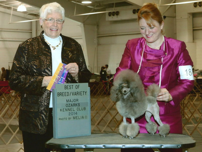 Breezy in the Ring - North Arkansas KC & the Ozarks KC Dog Show