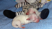 """Stormy delivers TWO BABY """"BOYS"""" !!"""
