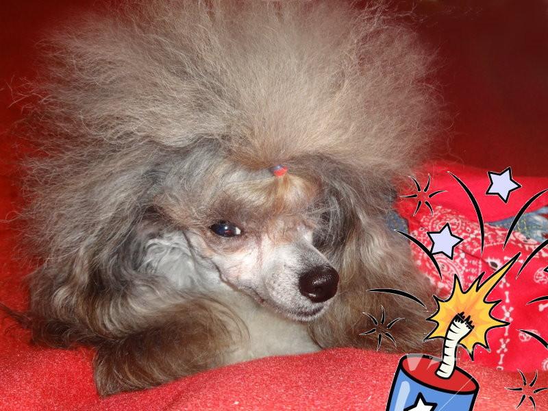 Pinkie - 7-4-14 - Birthday - 2 yrs 1f.jpg