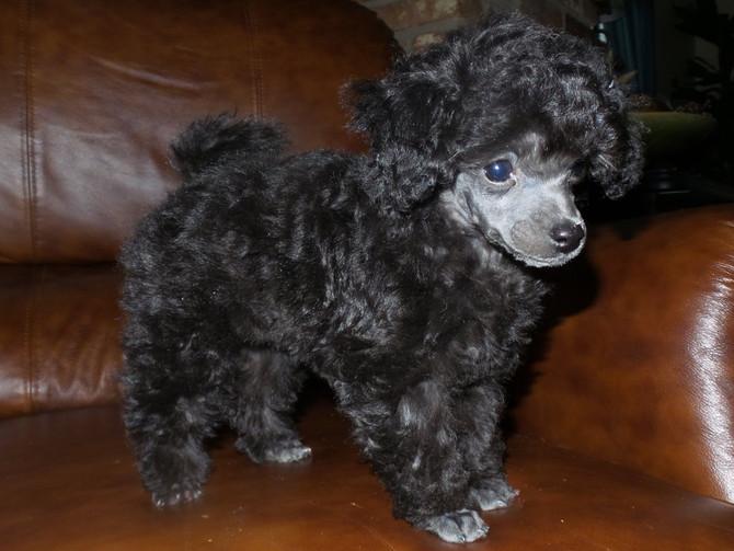 Charlie - 8 Weeks Old
