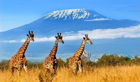 Mont-kenya-et-kilimandjaro_edited.jpg
