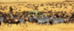 Serengeti-National-Park-1_edited.jpg