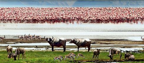 Lake-Manyara-National-Park-Adventure-Sav