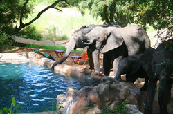 umlani-bush-camp-elephants-drinking-from