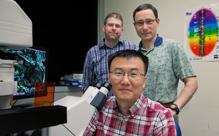 Illinois researchers advance understanding of schistosome reproduction