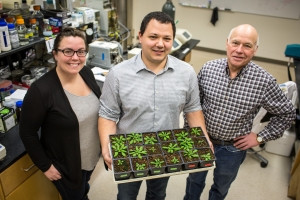 Newly characterized protein has potential to save U.S. farmers millions annually