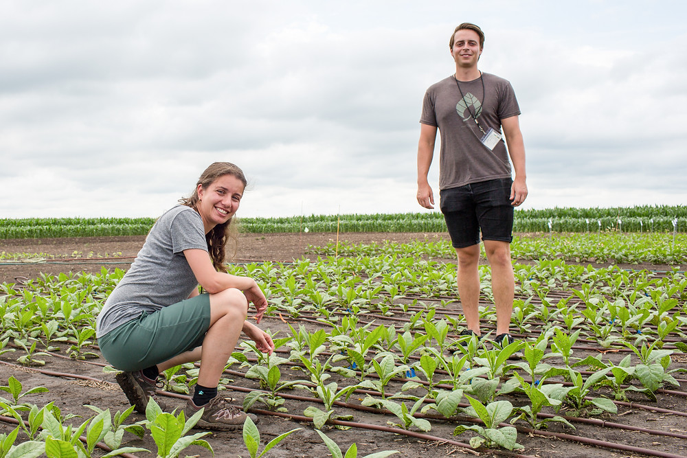 Two researchers sit in the field trials.