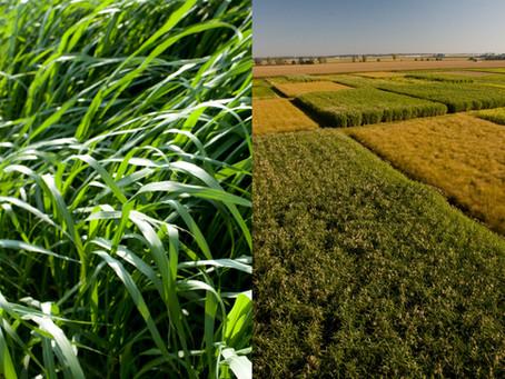 DOE grants $10.6 million to produce more biodiesel, biojet fuel