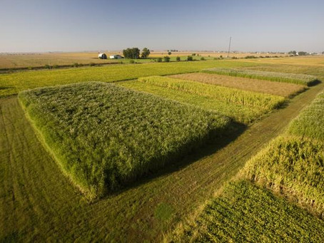 Energy farm tour reveals bioenergy crops' sustainability