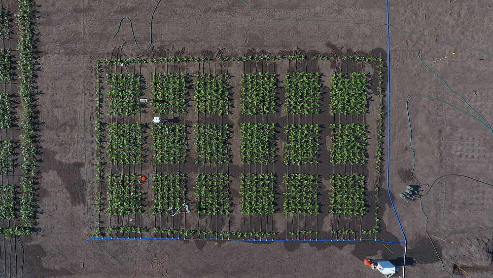 Aerial image of the field trial with 18 plots.
