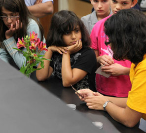 Middle school girls gained real-world science skills at Pollen Power! camp