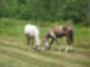 Horses at Cedar Hill Farm Bed & Breakfast
